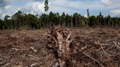 Deforested peatland cleared to make pulp and paper products in Sumatra, Indonesia in 2014.