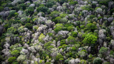 Dead trees are visible in the canopy of the Amazon rainforest, 60 miles southwest of Macapa, Brazil.