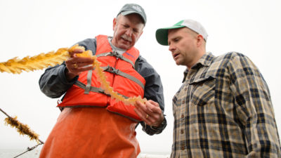 Ocean farmer Bren Smith (right) and biologist Charles Yarish examine harvested kelp.