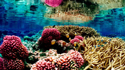 A coral reef at the Palmyra Atoll National Wildlife Refuge in the Pacific Ocean.