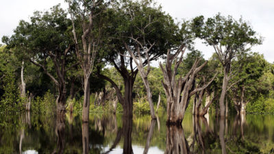 A wetland forest in Tupana, Brazil.