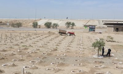 A plantation site for the 10 Billion Tree Tsunami Project in the Khyber Pakhtunkhwa province of Pakistan.