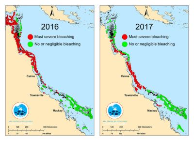 Between 2016 and 2017, nearly two-thirds of the Great Barrier Reef has undergone bleaching due to warm ocean temperatures.