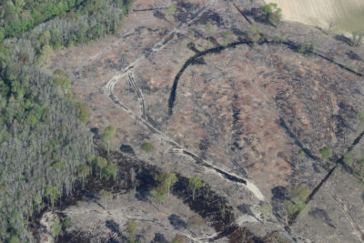 An area of clearcut forest in the Tar-Pamlico River basin in northeastern North Carolina.
