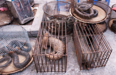 Caged animals at a wildlife market in Myanmar.