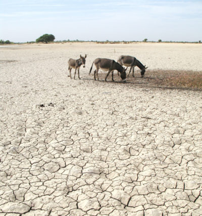 Donkeys on a dried-out section of the Inner Niger Delta in Mali.