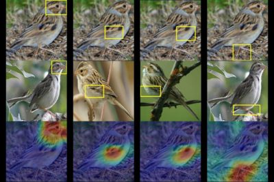 New artificial intelligence can identify 200 bird species, creating heat maps that identify parts of the image most similar to a species' typical features.