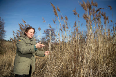 Farmer Isabella Hirsch stands in a field of reeds that she planted to increase biodiversity habitat on her farm in Heilbronn, Bavaria.