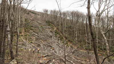 Work crews fell trees to clear the route for the Atlantic Coast Pipeline in Wintergreen, Virginia in 2018.