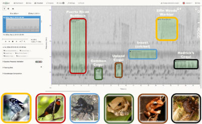 A 20-second spectrogram, showing various audio frequencies, from Puerto Rico includes the calls of these six species.