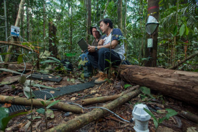 Scientists Bruno Portela and Iain Hartley extract data from a soil moisture probe as part of the AmazonFACE project.