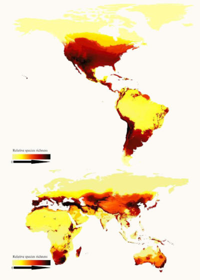 A look at relative species richness of bees around the world, showing how bees prefer arid, temperate regions rather than the tropics. Areas with darker colors have more species.