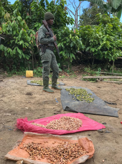 A park ranger stands over illegally harvested cocoa, found during a routine patrol of the Cavally Classified Forest in Ivory Coast.