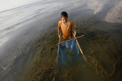 A boy catches shrimps in an area overgrown with milfoil near Samosir Island.