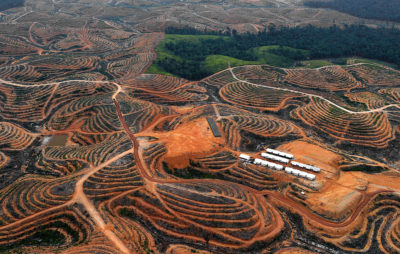 An area cleared for an oil palm plantation in Central Kalimantan province in Borneo.