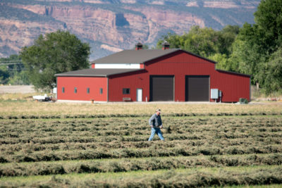 A farmer in Grand Junction, Colorado, works his alfalfa field, which is irrigated with water diverted from the Colorado River. To reduce water usage, some farmers are leaving their fields fallow in exchange for monetary compensation.
