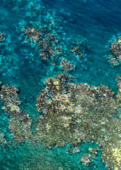 Aerial photographs of current coral bleaching along a 500-mile stretch of the Great Barrier Reef. The bleached sections appear white or yellow compared to the healthy coral surrounding it.
