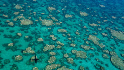 Aerial photograph of bleaching in the middle portion of the Great Barrier Reef, taken last month.