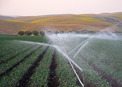 Crops being irrigated in California's Central Valley, part of the San Joaquin Basin.