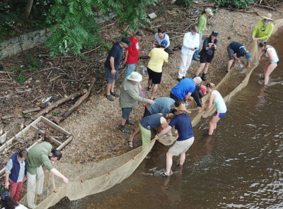 Conservationists examine fish and other aquatic life caught in a net in the Delaware River in Beverly, New Jersey.