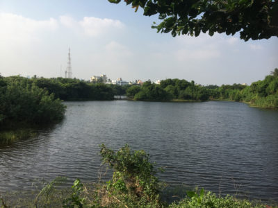 A restored wetland park on Chennai's Adyar River.
