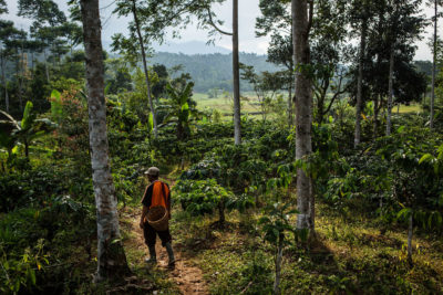 A farmer walks through his coffee plantation, which is integrated into the forest, in Lampung province, Indonesia.