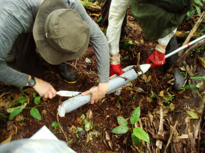 University of St Andrews ecologists collect peat samples from the Pastaza-Marañón swamp in the Peruvian Amazon.