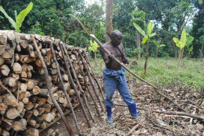 A tree farmer in eastern Congo stacks wood in a way that allows better air circulation during charcoal production, helping to carbonize wood more quickly and efficiently.