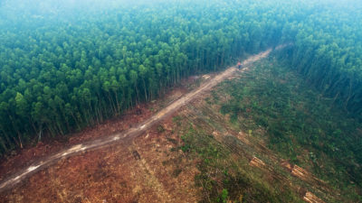 On Indonesia's island of Sumatra, which has one of the worst deforestation rates in the world, temperatures in logged areas have increased an average 1.05 degrees Celsius since 2000.