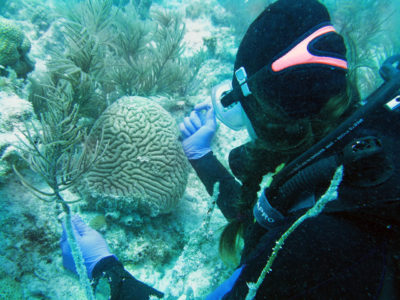 Biologist Abigail Clark collects tissue from diseased coral in Florida. Since 2014, the state's coral disease outbreak has spread to 96,000 acres of reef.