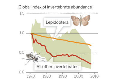 According to global monitoring data for 452 species, there has been a 45 percent decline in invertebrate populations over the past 40 years.