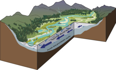 This three-dimensional illustration shows the longitudinal, lateral, and vertical dynamics of gravel-bed river systems such as the Yellowstone. The larger blue arrows signify the hyporheic waters, or groundwaters, that develop at the upper end of the floodplain and follow long flow pathways. The smaller arrows near the surface illustrate the water exchange between the surface waters and the upper hyporheic waters in the shallow bed sediments. The smaller U-shaped arrows illustrate the small exchanges that occur between the shallow hyporheic zone and deeper groundwater.