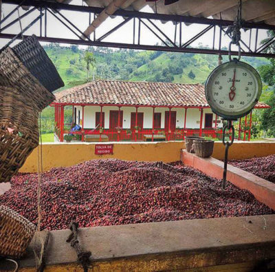 A coffee weighing station at Finca El Ocaso. Coffee prices have dropped so low that the family-run farm has started hosting tourists to make extra money.