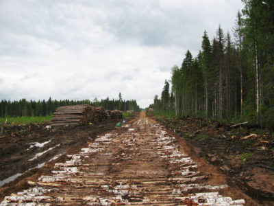 Loggers certified by the Forest Stewardship Council have cut large portions of the Dvinsky Forest in Russia, including areas that were supposed to be protected.