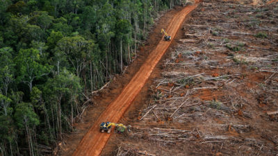 Forest cut to make way for an oil palm plantation in Papua, Indonesia in April 2018.