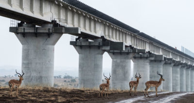 Impalas pass underneath the Standard Gauge Railway in Nairobi National Park. After conservationists raised objections, the track was elevated to allow for the movement of wildlife.