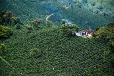 An aerial view of coffee plantations in Santuario, Colombia in May. Small farms such as these have been hit hardest by climate change and low coffee prices.