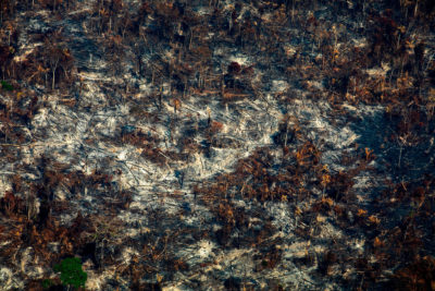 A recently burned section of forest in Altamira, Para state, Brazil on August 28.
