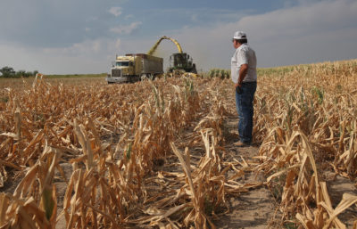 Eastern Colorado farmer Jay Sneller watches the mowing of his drought-ravaged corn crop during the drought of 2012.