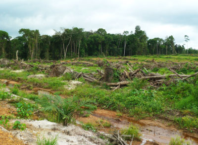 Trees cleared in southern Liberia in 2012 to make way for a plantation by Golden Veroleum, the country's largest palm oil company.