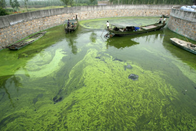 Workers navigate their way through an algae bloom in Lake Taihu, China's third largest freshwater lake, in June 2007.