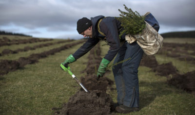 A worker plants Sitka spruce saplings at a reforestation project in Doddington, England in 2018.