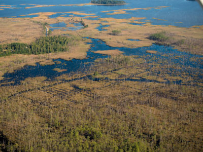 Saltwater intrusion has killed wide swaths of forest in Blackwater National Wildlife Refuge in Dorchester County.