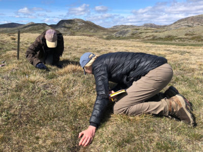 Researchers Rebecca Walker and Conor Higgins check plant growth stages in southwestern Greenland.