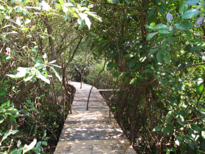A tourist boardwalk built in a new stand of mangroves in the village of Wedung.