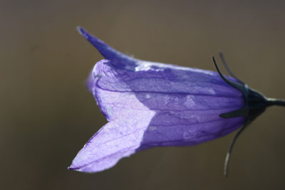 The annual growing cycle for harebell flowers now begins 10 days earlier than it did a decade ago.