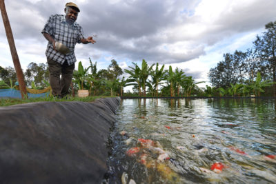 William Kiarie feeds goldfish at his fish farm in Sagana, Kenya, where he also raises tilapia and catfish.