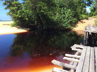 Waterways around Fampotakely, Madagascar run blood red from rosewood stored underwater while waiting for ships to transport it to China.