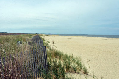 A newly created sand dune with recently planted american beachgrass at the Prime Hook refuge.