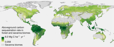 Aboveground carbon accumulation rates, in metric tons of carbon per hectare per year, in naturally regrowing forests in forest and savanna biomes.